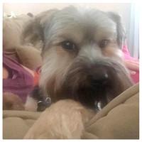 221/365. Puppy is not happy we left him for 9 days. #familyfriends365 #markel365