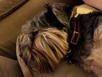 238/365. Sleepy puppy. #familyfriends365 #markel365