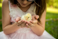 Baby Chicks/Easter